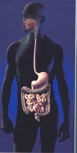 intestino lunghezza.jpg