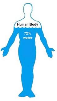 componenti corpo umano