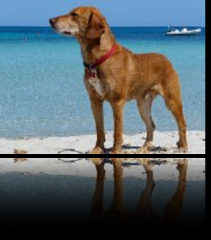 spiagge cani.png